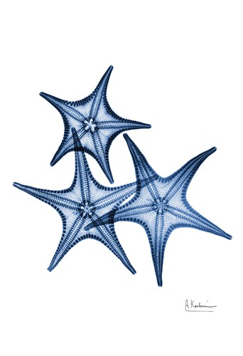 Blue Trio Starfish Poster by Albert Koetsier for $22.50 CAD