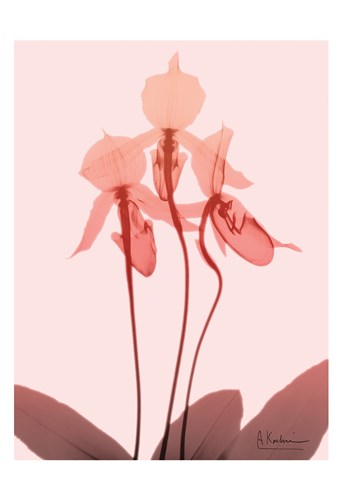 Furiosa Orchid Poster by Albert Koetsier for $22.50 CAD