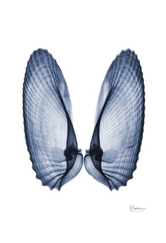 Angel Wings Poster by Albert Koetsier for $22.50 CAD