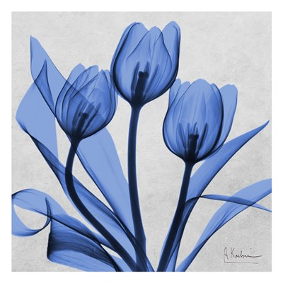 Midnight tulips 2 Poster by Albert Koetsier for $18.75 CAD