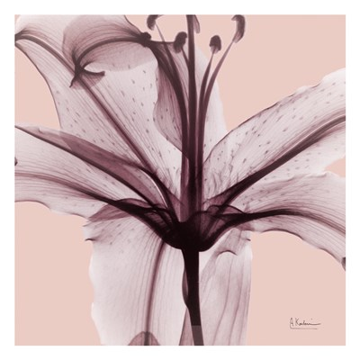 Sensitive Lily Poster by Albert Koetsier for $18.75 CAD