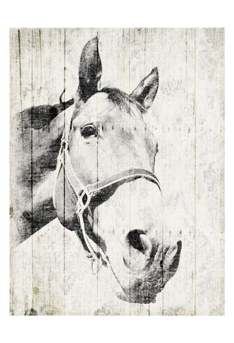 Vintage Horse Poster by Jace Grey for $22.50 CAD