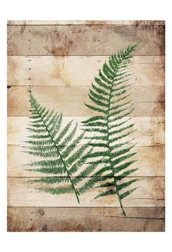 Ferns On Wood Poster by Jace Grey for $22.50 CAD