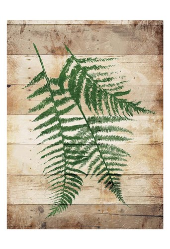 Ferns On Wood Mate Poster by Jace Grey for $22.50 CAD