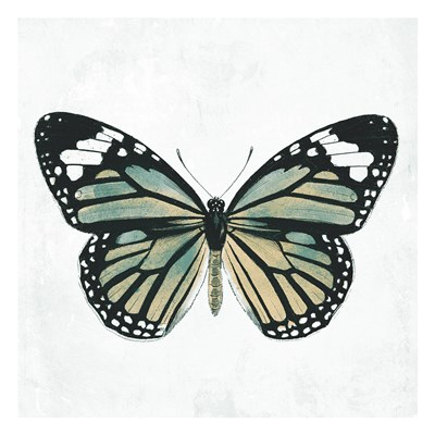 Neutral Butterfly Poster by Jace Grey for $18.75 CAD
