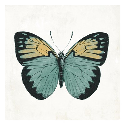 Neutral Butterfly 3 Poster by Jace Grey for $18.75 CAD