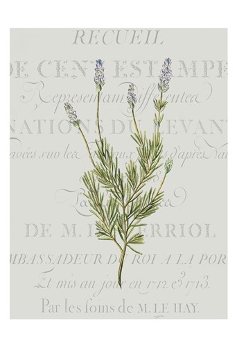 Fresh Herbs 1 Poster by Kimberly Allen for $22.50 CAD