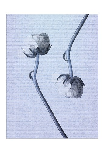 Denim Floral 3 Poster by Kimberly Allen for $22.50 CAD