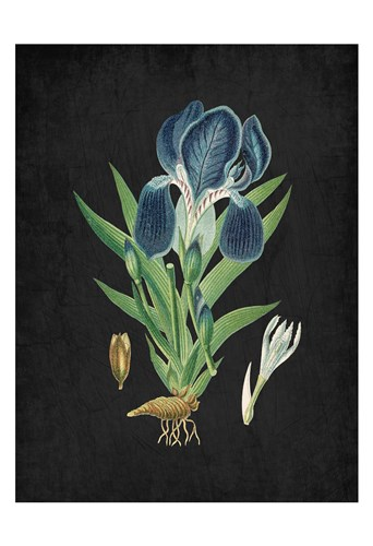 Blue Iris 3 Poster by Kimberly Allen for $22.50 CAD