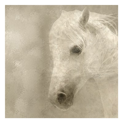 White Mane Poster by Kimberly Allen for $18.75 CAD