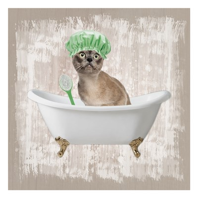 Kitty Baths 3 Poster by Marcus Prime for $18.75 CAD