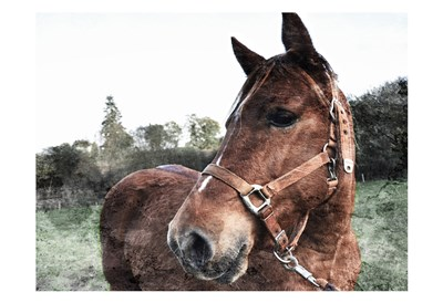 Horse Pose Poster by Milli Villa for $22.50 CAD