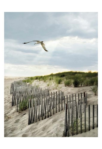 Dawning Seagull and Godbeams Poster by Joseph Rowland for $22.50 CAD