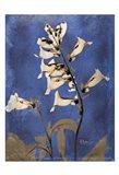 Golden Foxglove 5