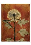 Chrysanthemum Orange II