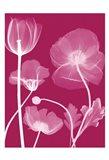 Transparent Flora 13