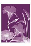 Transparent Flora 10
