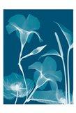 Transparent Flora 14