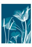 Transparent Flora 11