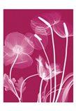 Transparent Flora 12