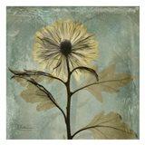 Chrysanthemum 2 - square