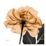 Copper Rose Black Leaves