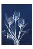 Ecto Indigo Tulips