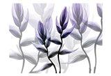 Lavender Heaven 1