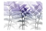 Lavender Heaven 12