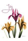 Joyful Iris