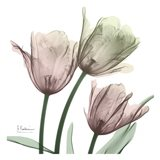 Natural Luster Tulips 1