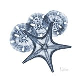 Indigo Starfish and Sand Dollar