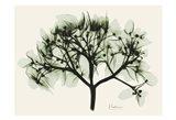 Verduous Hydrangea 2