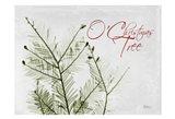 O Christmas Evergreen