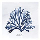 SeaweedFig1