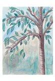 Shade Tree 1