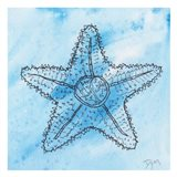 Coastal Starfish
