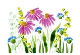 Wild Flowers 10