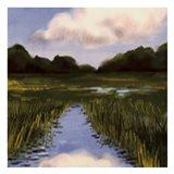 Marsh Wonder