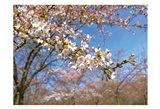 Sudden Blossom 1