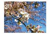 Sudden Blossom 2