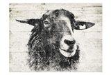 Vintage Sheep