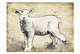 Vintage Lamb Sketch