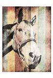 Miultiwood Vintage Horse