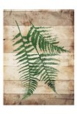 Ferns On Wood Mate