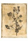 Stencil Floral