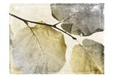 Classic Leaves