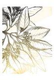 Fade Botanicals