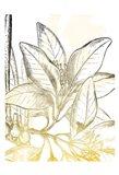 Fade Botanicals Mate
