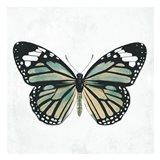 Neutral Butterfly
